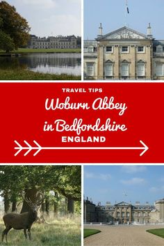 Exploring the very delightful Woburn Abbey in Bedfordshire where the ritual of Afternoon Tea began! Time Travel, Travel Tips, Uk Tourism, Woburn Abbey, Best Places To Eat, Photography Projects, Autumn Trees, Historic Homes, Afternoon Tea