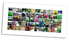 project 52 photoshop collage template for photographers from http://www.photographercafe.com/