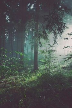 This must be where fairies live. Deep into the dark and beautiful woods
