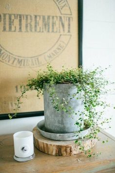 """Keep up to date on the latest news & stories from the host of HGTV's hit remodeling show """"Fixer Upper"""" & owner of the Magnolia Market, Joanna Gaines! Chicken Feeder Decor, Chicken Feeders, Chicken Coops, Magnolia Farms, Magnolia Homes, Magnolia Market, Magnolia Blog, Joanna Gaines Blog, Galvanized Decor"""