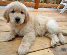 I want one of these in a box under a christmas tree as a christmas present!^_^