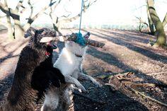 Jasper, Lyra and Daisy