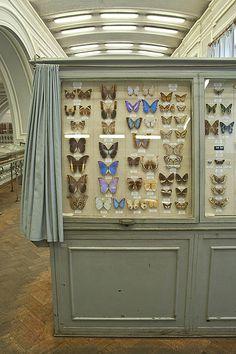 Butterflies - Zoological museum