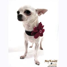 Daisy Flower Hand Crocheted Personalized Dog Necklace by myknitt #daisy #flower #diy #crochet #pattern #chihuahua