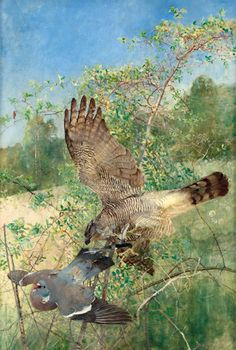 Bruno Liljefors (1860-1936)  -  Northern Goshawk and a Wood Pigeon.