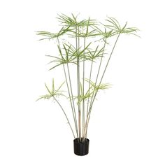 You will like this artificial plant of cyperus with its attractive bright green foliage. This artificial tree has a very beautiful silhouette and will dress any room of your house. Moreover, it will bring you greenery all year long! Artificial Tree, Knitted Throws, Green Plants, Bright Green, Decoration, Houseplants, Evergreen, Indoor Plants, Greenery