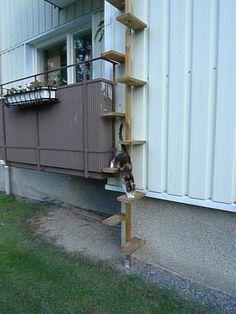 Bildresultat för bygga kattstege