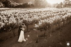The sepia tone really sets the mood for this romantic vineyard shot -Wedding at Chateau Julien, Monterey {Photo by Bustle & Twine}