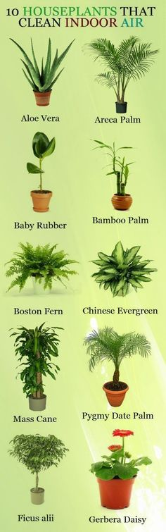 """""""10 Houseplants That Clean Indoor Air"""" - good for when we can't open up the windows with all the rain and humidity :))) #diyhomedecor"""