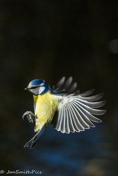 Funny Birds, Cute Birds, Pretty Birds, Small Birds, Little Birds, Colorful Birds, Beautiful Birds, Animals Beautiful, Nature Animals