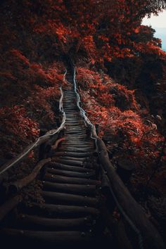 Dark Path by Hanson Mao on 500px