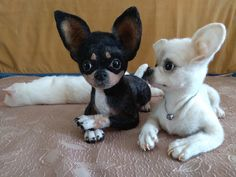 Effective Potty Training Chihuahua Consistency Is Key Ideas. Brilliant Potty Training Chihuahua Consistency Is Key Ideas. Teacup Chihuahua Puppies, Cute Chihuahua, Cute Dogs And Puppies, I Love Dogs, Doggies, Cute Baby Animals, Animals And Pets, Funny Animals, Mini Pinscher