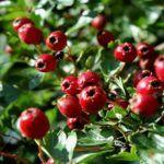 Herbalism, Fruit, Plants, Food, Gardening, Diet, Fitness, Decor, Herbal Medicine