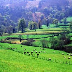 Country farmyards | Sheep grazing in the hills of Spanish Basque Country