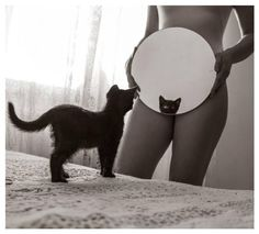 Pussy-In-The-Mirror
