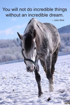 """You will not do incredible things without an incredible dream."" - John Eliot #Horses"