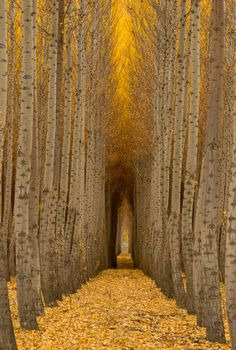 We'd love to see this for ourselves! Beautiful trees in Boardman, Oregon.