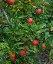 jabloň Trees, Gardening, February, Tree Structure, Garten, Lawn And Garden, Wood, Garden, Square Foot Gardening