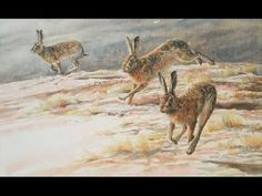The Fabled Hare - Maddy Prior