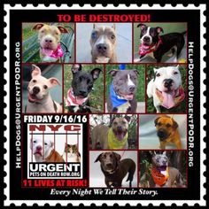 11 BEAUTIFUL LIVES TO BE DESTROYED 09/16/16 @ NYC ACC. ***SO MANY DOGS HAVE BEEN…