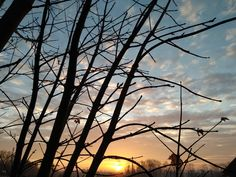 Silhouette, Celestial, Sunset, Outdoor, Sunsets, Outdoors, Outdoor Living, Garden, Silhouettes