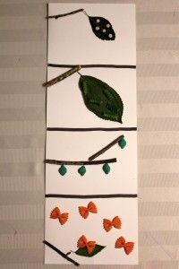 This is a fun craft to teach the life cycle of a butterfly, and is adaptable for a variety of ages. Materials needed: ~ Paper plate or paper ~ Markers ~ Rice or lentils (eggs), Rotini (caterpillars), Shells (chrysalis), Farfalle . Kindergarten Science, Preschool Crafts, Fun Crafts, Butterfly Painting, Butterfly Crafts, Life Cycle Craft, Butterfly Life Cycle, Grande Section, Spring Activities