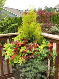 Great Design Plants - traditional - landscape - seattle - by Le jardinet