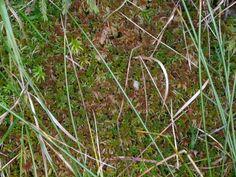 Spahgnum moss (Rejvíz)