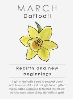 March Birth Flower Daffodil Horoscope Zodiac Astrology