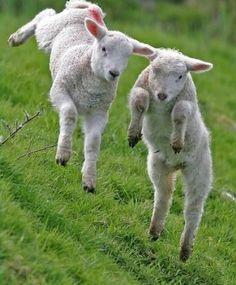 Voorjaar op de boerderij