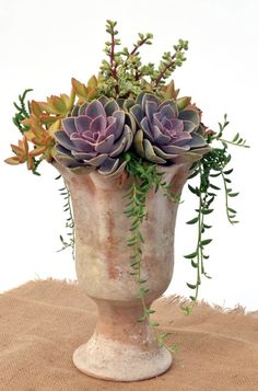 Succulents in a clay vessel, georgeous!