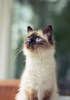 I see you Meow❤❤ ✿ℒℴѵℯ`❤ ✿