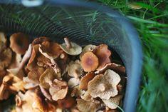 19_MushroomForaging_forageSF040614_AndriaLo.jpg