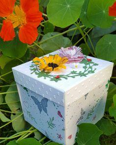 Explosionsbox Sommertraum, lasse den Sommer explodieren wann immer es dem Gartenfreund gefällt !