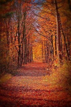 Golden Florest