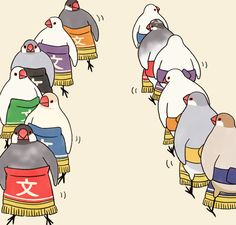 tsujisaoricp: すもう文鳥どひょういり