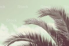 Palm Tree Fronds and Sky royalty-free stock photo Palm Tree Leaves, Palm Trees, Sky Photos, Abstract Photos, Image Now, Looking Up, Filter, Royalty Free Stock Photos, Modern
