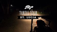 Die Lederschildkröte ist die rößte Meeresschildkröte. In St. Lucia (Südafrika) kannst du sie bei einer Turtle Tour beobachten. Infos Und Tipps findest du hier