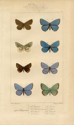 Click HERE for the Full Size Printable PDF I adore these old Butterfly Prints, or perhaps they are Moths?! These are so colorful it's hard to tell! This Vintage Printable came in the mail this week, straight from France! Included on the page are some lovely Winged Insects, colored in soft colors including Blue, Green, …