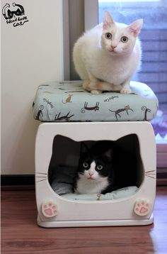 stool for cats