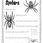 1000+ images about Education---Spiders on Pinterest | Spider, Spider ...
