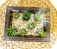 easy DIY air plant (tillandsia) centerpiece