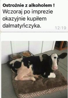 from the story conversaciones con olor a sobaco. Funny Quotes, Funny Memes, Jokes, Hahaha Hahaha, Polish Memes, Reaction Pictures, Good Mood, Best Memes, Animals And Pets