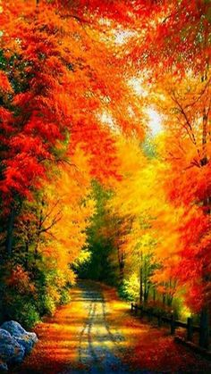 Fall is beautiful...God gives us wonderful color.