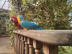 parrot at the butterfly house http://thisdayilove.blogspot.co.uk/2013/04/the-butterflies.html