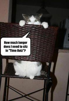 good funny animal quotes » Events Orb - Mixed Categorized Events hahahahahahahahhahaha!!!!!!!!!!!