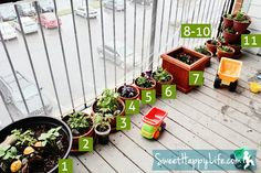 Toddler Snacking Garden (that fits on a balcony) - I wish I had a green thumb. I have killed every single plant that has been under my care. =(