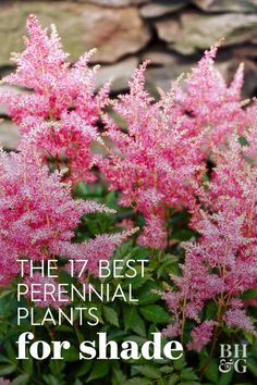 Brighten up shaded spots in your landscape with these easy-to-grow, colorful shade-loving perennial plants that come back year after year. These pretty shade perennials can make hard to grow areas areas the greatest points of interest in your garden. Full Shade Plants, Shade Loving Shrubs, Shade Garden Plants, Cool Plants, Flowers In Garden, Shade Tolerant Plants, Colorful Plants, Love Garden, Colorful Garden