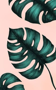 Philodendron Monstera Art Print by naylasmith Phone Wallpapers, Cute Wallpapers, Wallpaper Backgrounds, Plant Wallpaper, Painting Wallpaper, Green Wallpaper, Plant Painting, Plant Art, Pattern Wallpaper
