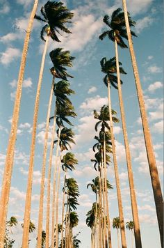 Summer time...California palm trees.